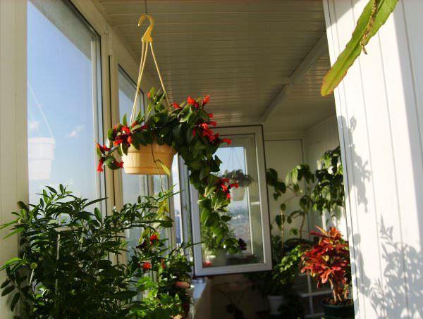 кухня совмещенная с балконом дизайн фото 15